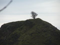 2011 02 24 53 -1 LoneTree.png